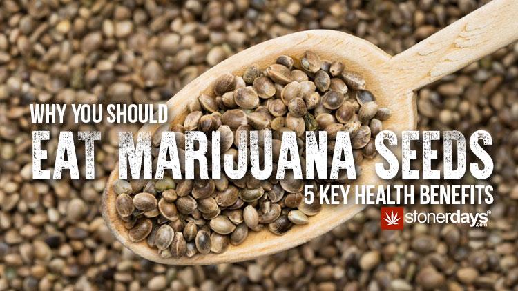 Why-You-Should-Eat-Marijuana-Seeds.jpg