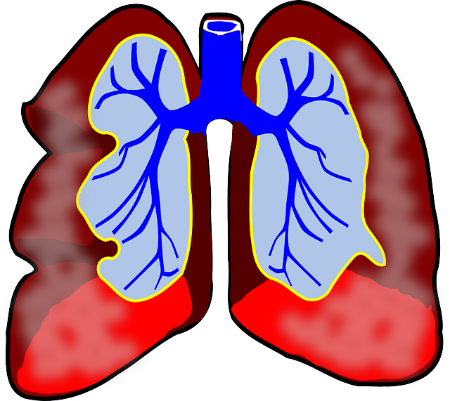 lungs39981_640.png
